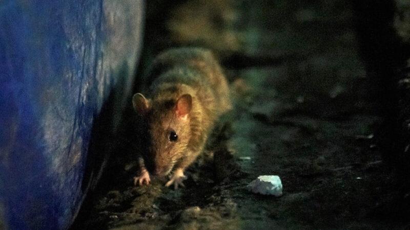 中共病毒未停 內蒙再現鼠疫確診病例