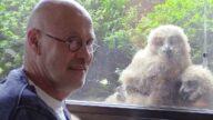世界最大猫头鹰来他家筑巢 鸟宝们还迷上看电视(视频)
