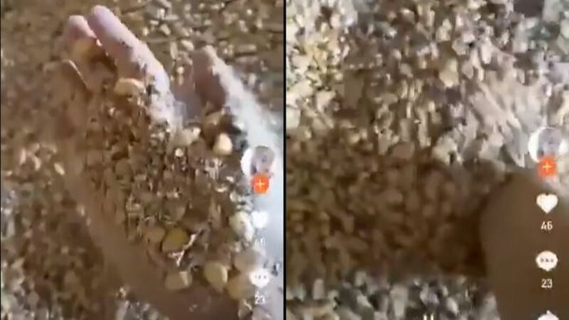 視頻曝光大陸某地糧庫真相:存的都是「篩下物」(視頻)