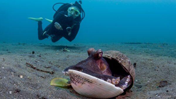 小章鱼用塑胶杯当壳 善心潜水员帮它换新家(视频)
