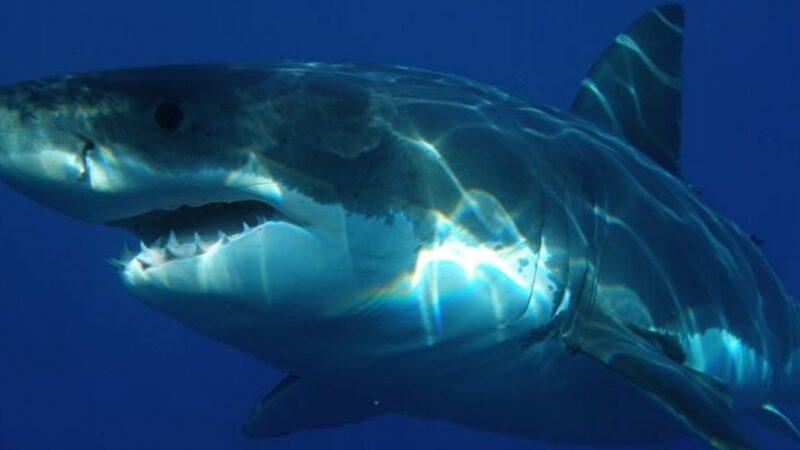 妻遭鯊魚撕咬 澳洲勇夫飛撲痛擊成功救回