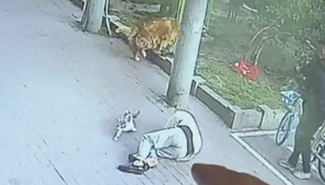 """""""天外飞来一猫"""" 老翁蹓狗被砸当场倒地不起"""