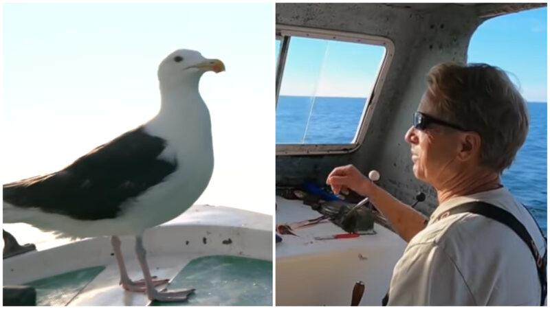 断腿海鸥报救命之恩 15年天天陪船长出海