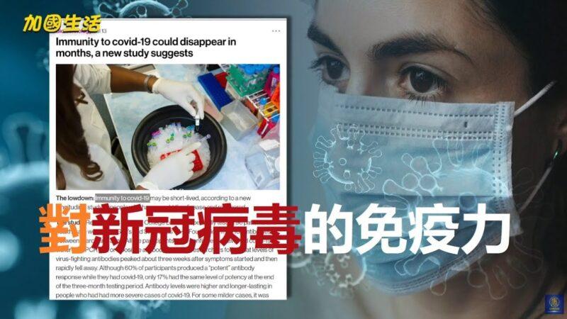 【加國生活】人類對中共病毒的免疫力到底可持續多長時間?是否會重複染病?