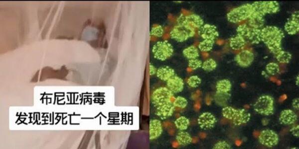 《石濤聚焦》中共國再次爆發「新型布尼亞病毒」發病到死亡7天