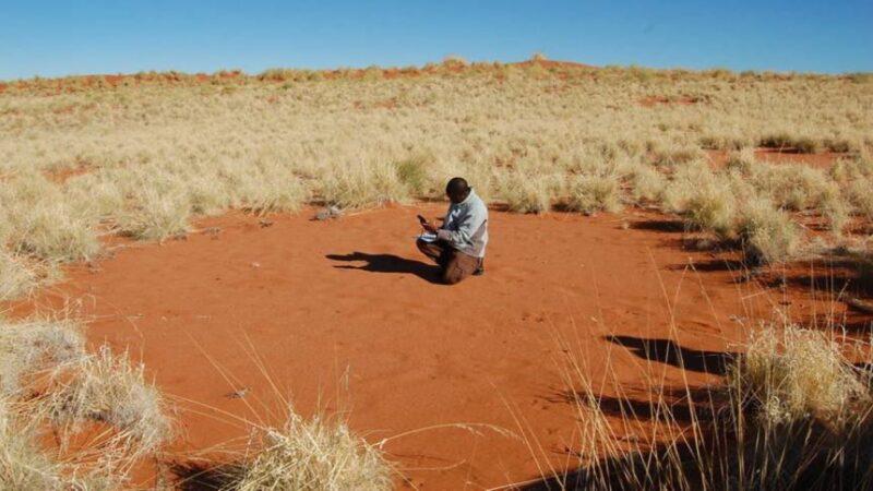 沙漠中的神祕「仙女圈」 !是UFO的著陸點還是神的腳印?