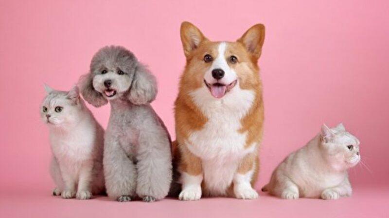 研究:看可爱动物有益健康 血压心率都降低