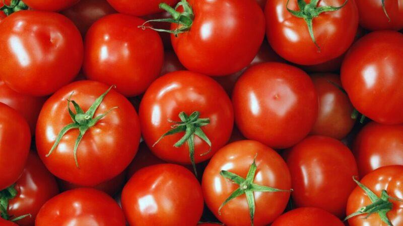美味番茄酱 烤箱简单自制(组图)