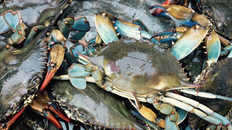 生吃30隻螃蟹補身?浙江婦體內檢查出近十種寄生蟲