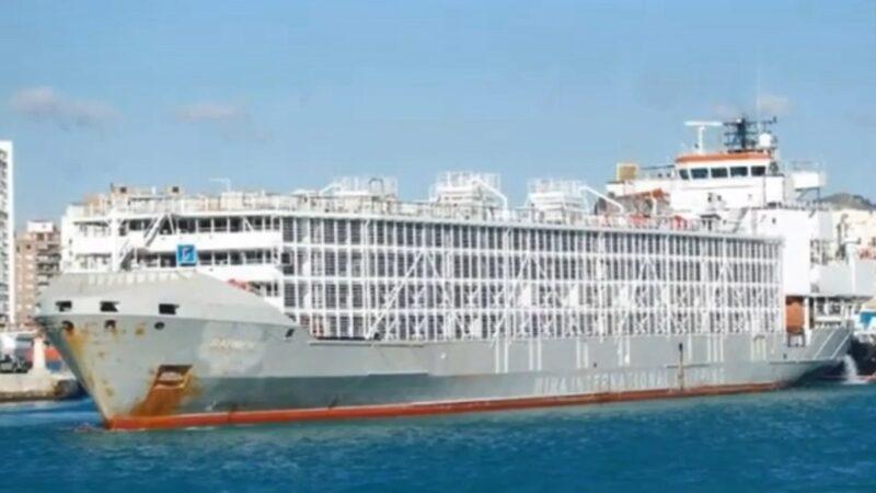 貨輪在日本海域失聯 傳載43人及近6000頭牛