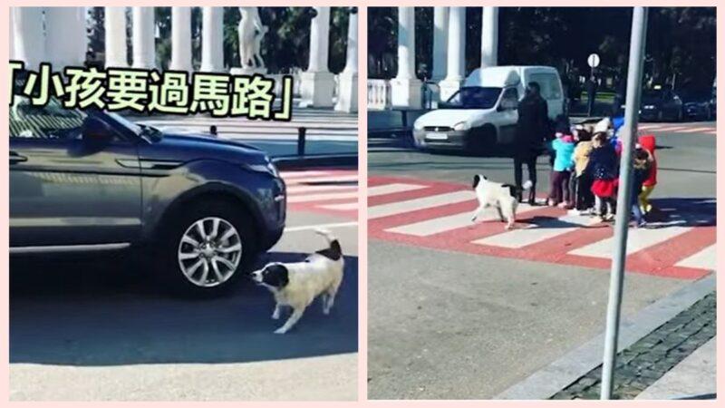 """流浪狗当""""交警"""" 每天保护孩童过马路(视频)"""