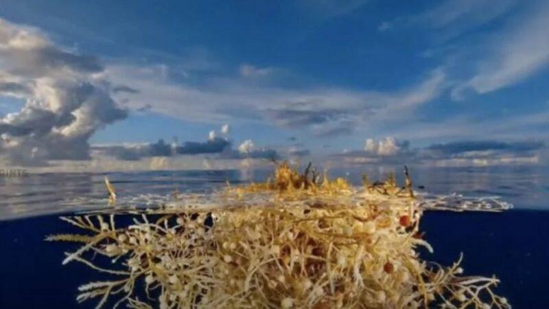 「洋中之海」清澈度達72米卻讓船隻有去無回