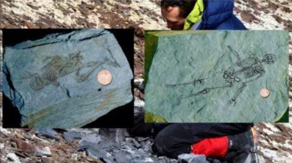 南極發現6億年前人類化石 比恐龍年代更早