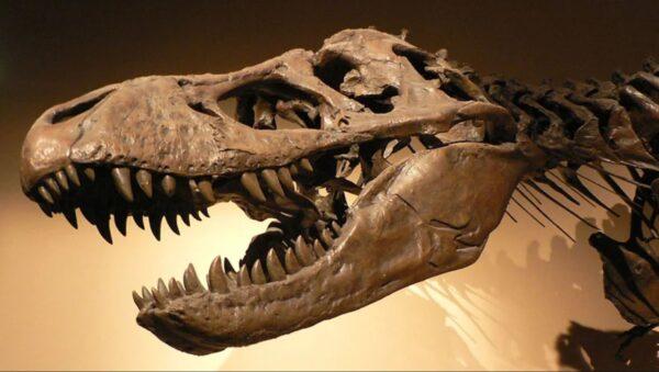 霸王龍化石的頭骨上居然有一顆1.5mm子彈孔?