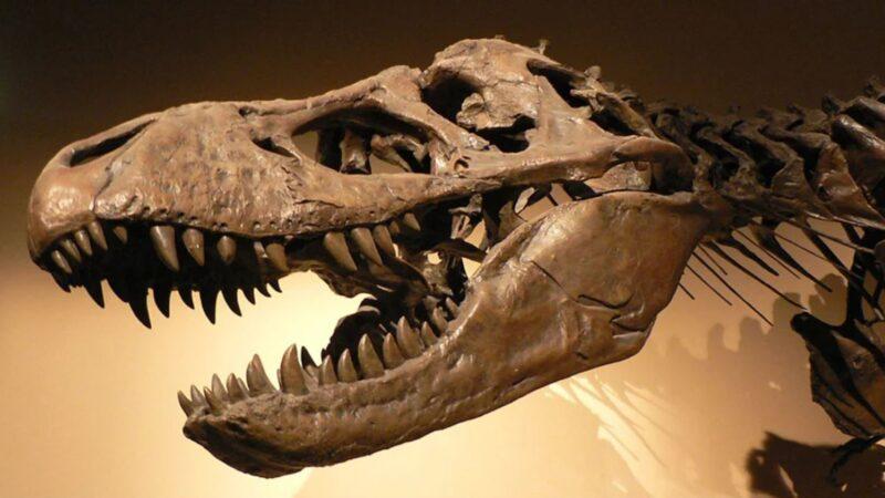 霸王龙化石的头骨上居然有一颗1.5mm子弹孔?