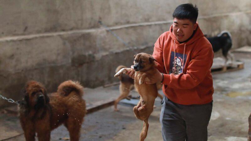 贵州流浪狗撞伤老人 好心喂狗的人被判赔4万