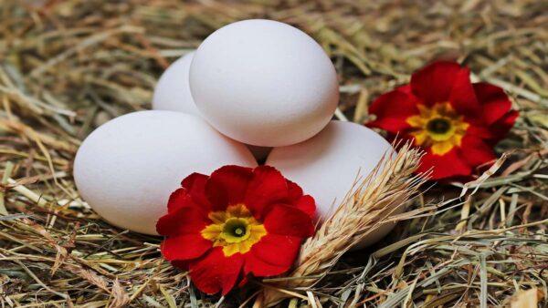 鸡蛋的5种错误处理法 你犯过几种?(组图)