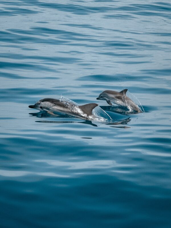 海豚媽媽絕食5天推幼崽屍體前行 專家:痛心