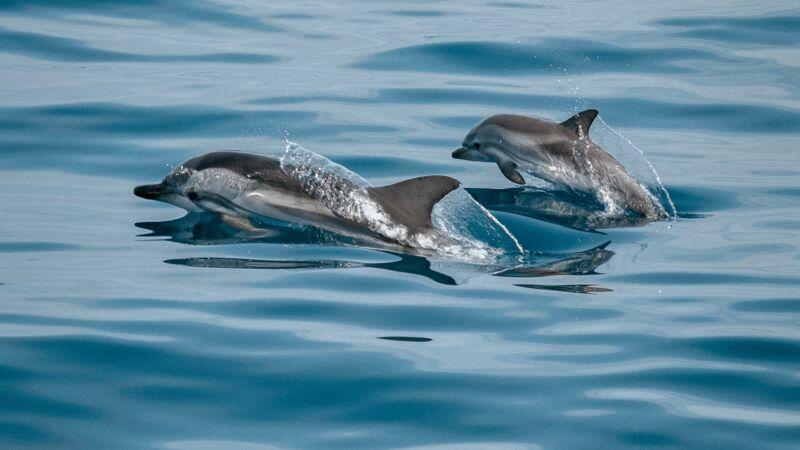 海豚妈妈绝食5天推幼崽尸体前行 专家:痛心