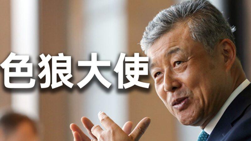 秦鹏快评:中共战狼大使涉黄被抓现行,遭国际嘲讽