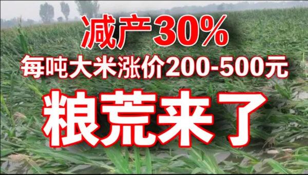 老黑:中国大米减产30% 米厂进入疯抢模式 涨价已经开始