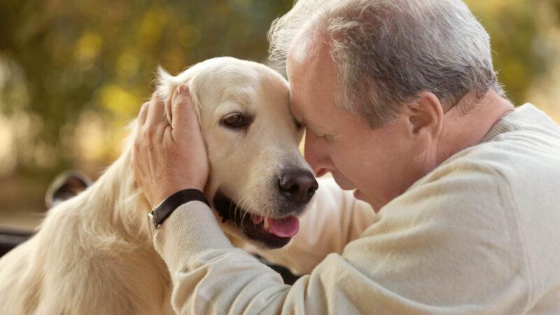 日本爱心犬有预知力 陪临终老人走完最后一程