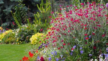 12種漂亮的銀葉植物點亮你的花園(下)