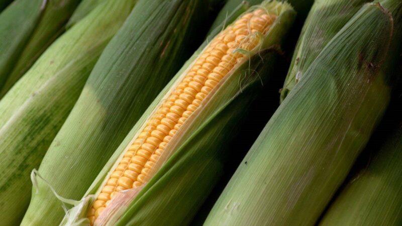 路透:中国玉米库存耗尽 海外抢购将推高粮价