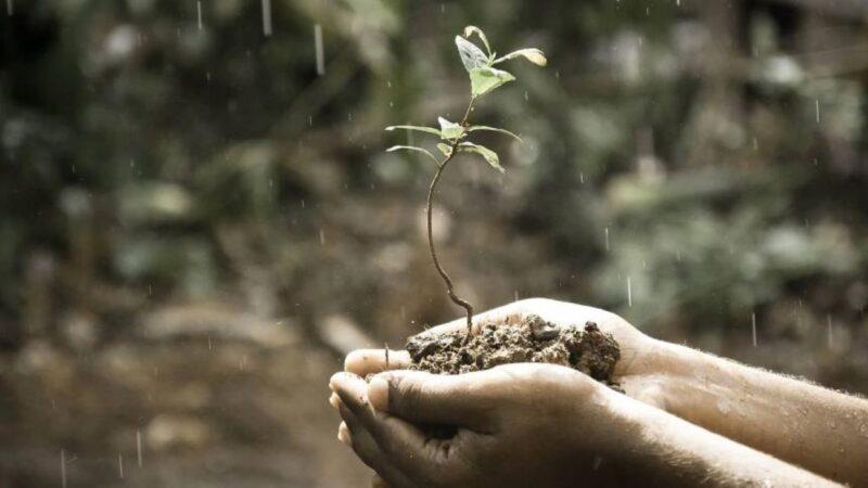 植物也會「說話」?! 植物遠比我們想像中還要聰明