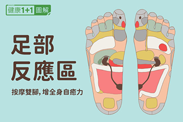 「足部反應區」全圖解 按摩雙腳提升全身自癒力