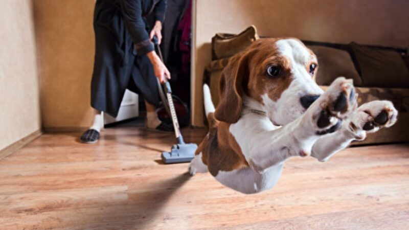 選擇適合的地板材質 貓狗居家活動好放鬆