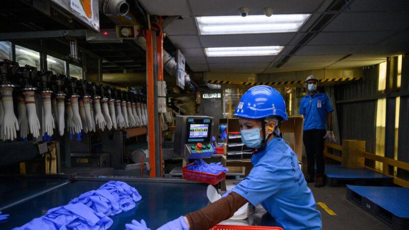 全球最大手套製造商2453名員工染疫 關閉28間工廠