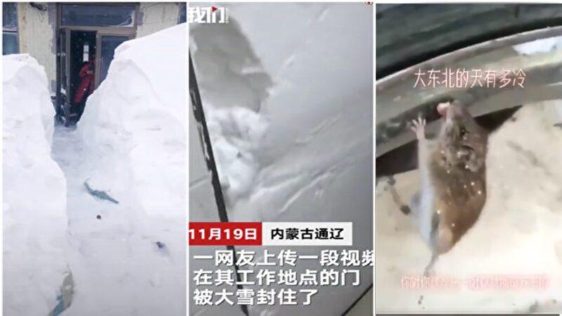 東北特大暴風雪 老鼠的舌頭都凍住了(多視頻)