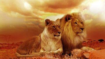 《獅子王》復仇記:王位之爭即正邪大戰
