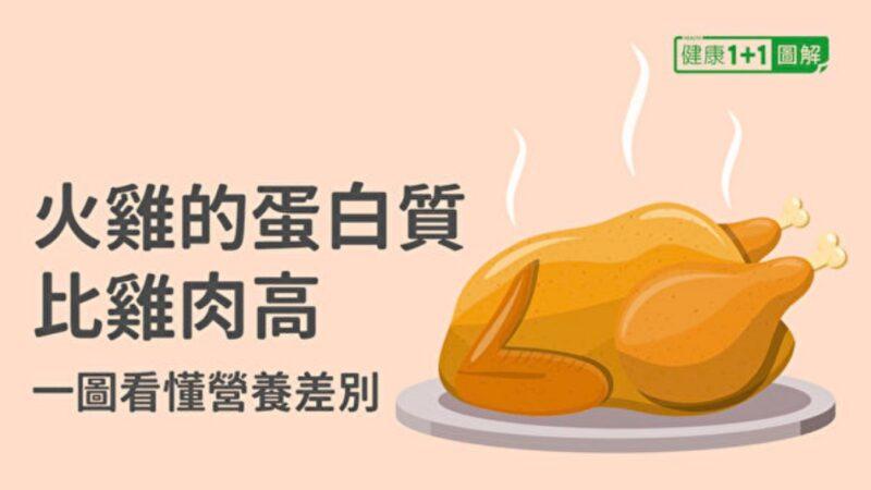 火鸡的蛋白质比鸡肉还高 一图看懂营养差别