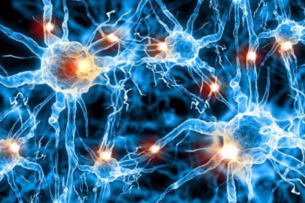 研究发现人脑神经元之间新型联系方式