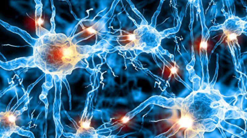 研究發現人腦神經元之間新型聯繫方式