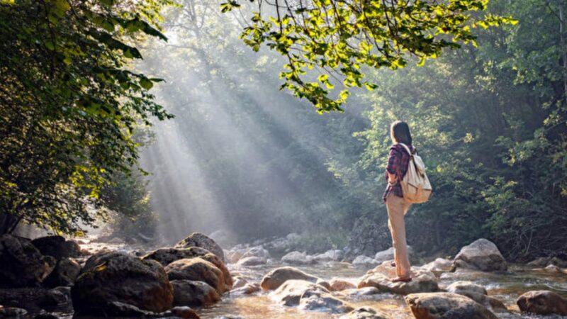 森林浴舒压又抗癌 实证3大疗愈功效