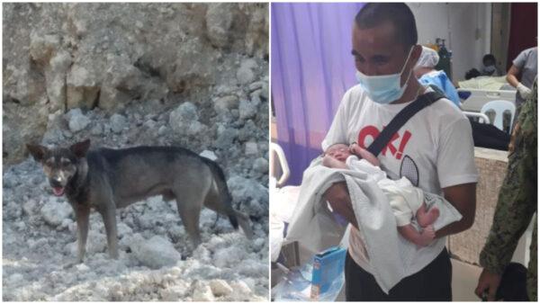 菲律賓靈犬追車狂吠 引人到垃圾場救男嬰
