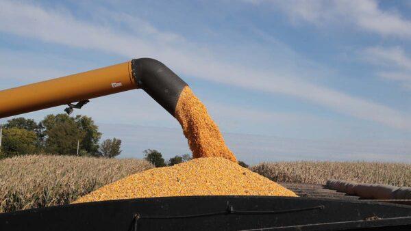 白宮稱將審查美中貿易協議 中共購買大筆美國玉米