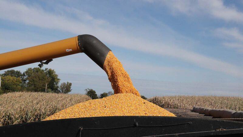 白宫称将审查美中贸易协议 中共购买大笔美国玉米
