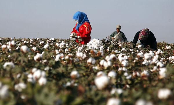 美最新制裁令 禁止新疆棉花番茄商品进口