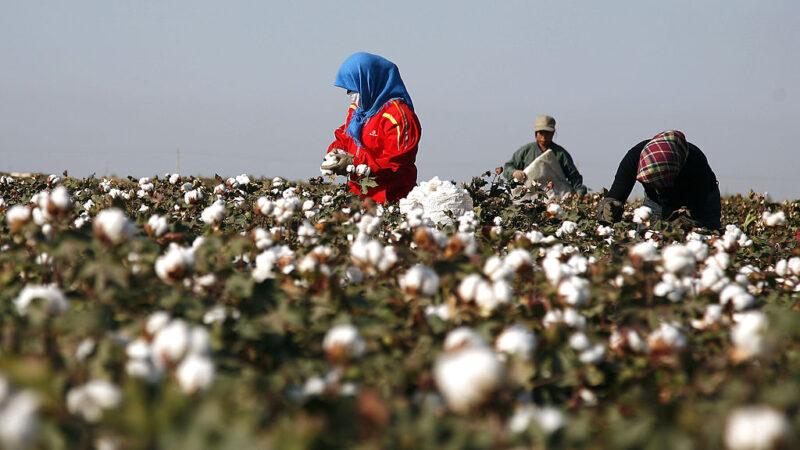 美最新制裁令 禁止新疆棉花番茄商品進口