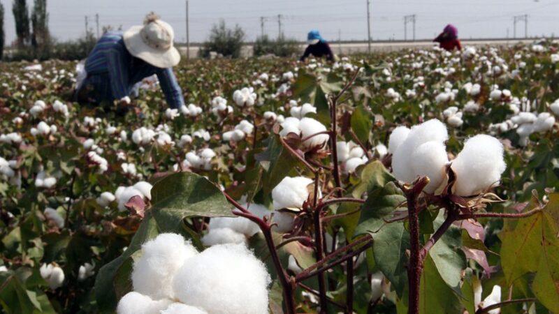 英國阻止進口新疆勞工產品 加拿大美國跟進