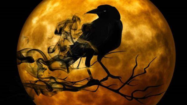 多國烏鴉羣聚黑壓壓一片 彷彿末日來臨