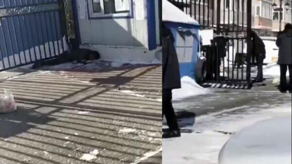 长期封门情绪崩溃 哈尔滨居民捅死看门人(视频)