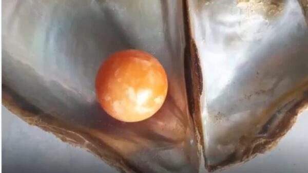 泰国渔民海边捡贝壳 意外捡到稀世橘色珍珠