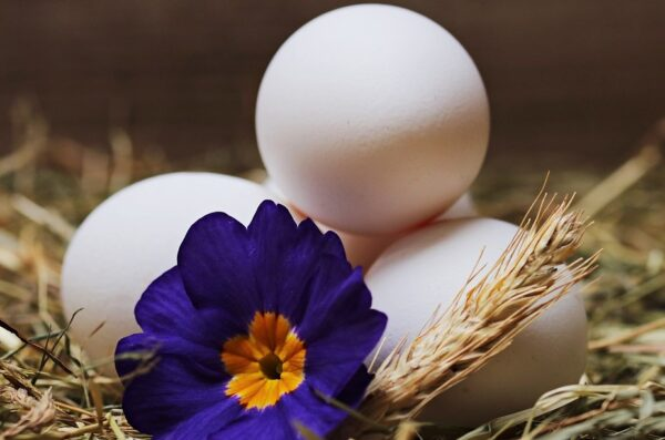 鸡蛋怎么存放及可保存多久?日本专家释疑