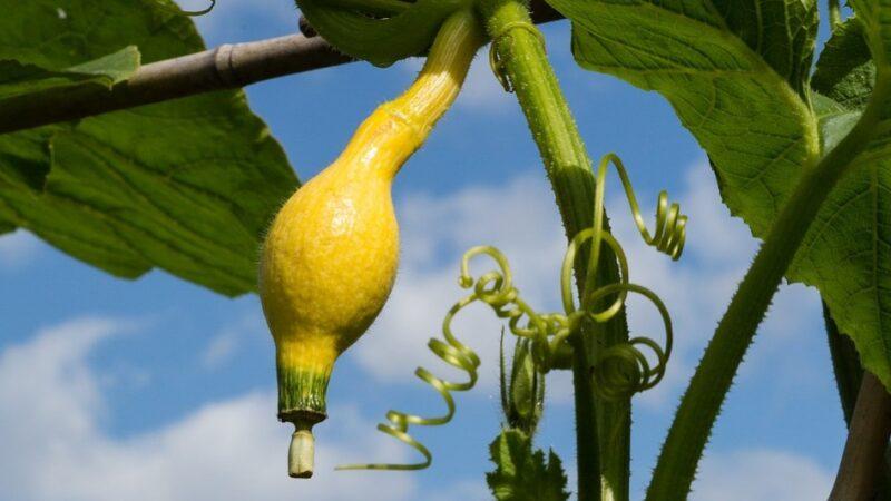 奇妙的微观世界:小小葫芦有乾坤