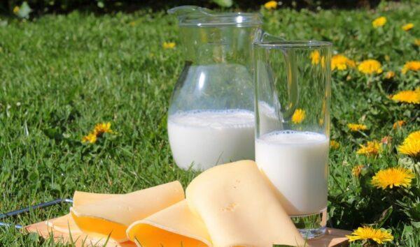 長期喝牛奶和不喝牛奶的人相比 差別好大